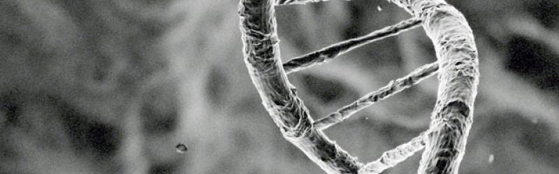 Image of dna strain